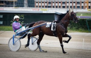 1200px-vienna_-_trotting_racer_at_the_krieau_-_6602