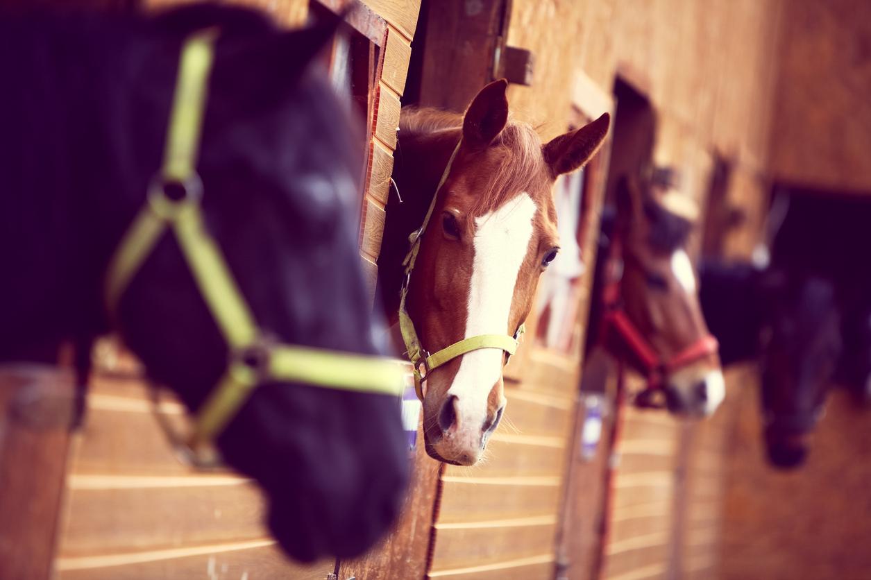 Hevosten eriarvoisuus raveissa
